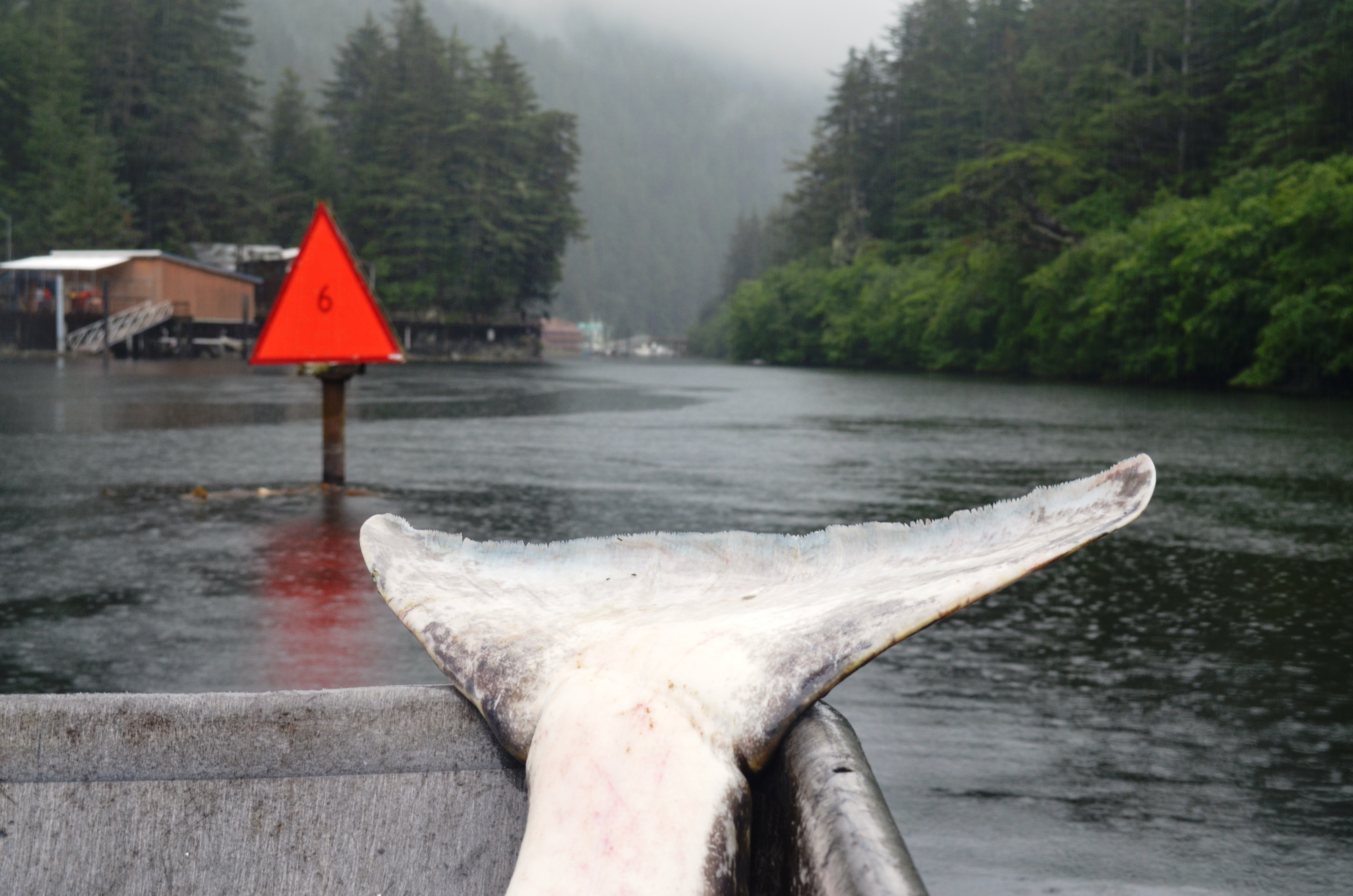Idyllic settings and tales of halibut you'll be proud to tell. Alaska's Tanaku Lodge offers amazing fishing, great lodging and fantastic meals. Daily rain gear is included in the package.