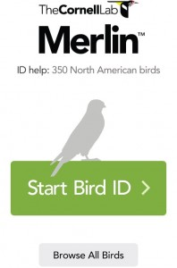 Figure 1. This is the opening screen of the application. You can use it as a field guide, or as a tool to figure out what exactly is the bird at which you are looking.